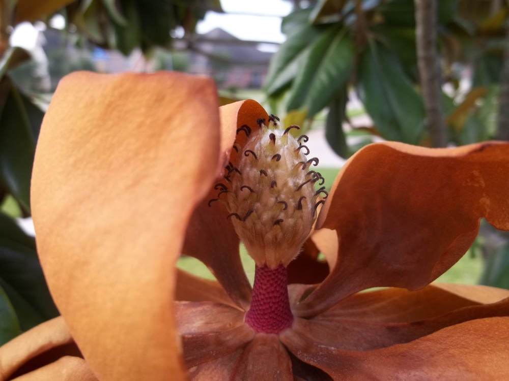 Magnolia (3/3)