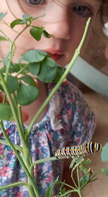 noracaterpillar